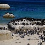 Cape Town'da Mutlaka Yapın