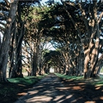 Der Cypress Tree Tunnel in Point Reyes, CA