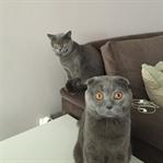 Kedinizi Kucağınıza Alırken