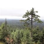 Reisetipp: Der Harzer Brocken