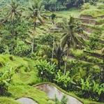 Fun Facts aus Bali