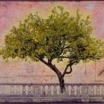 Kitap Önerisi: Limon Ağacı-Sandy Tolan