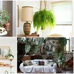 Yaratıcı Bir Dekorasyon Aracı: Bitkiler