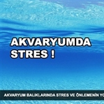 Akvaryumda stres ve önlemenin yolları