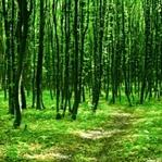 Doğayla İçi İçe Olduğunuzda Başınıza Gelecek 6 Güz