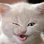 Evde kedi beslemenin kötü tarafları