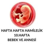 Hafta Hafta Hamilelik-Hamileliğin 10. Haftası