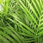 Kapalı Alanlarda Havayı Temizleyen Bitkiler