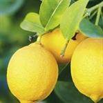 Limonun Yararları ve Zararları Nelerdir?