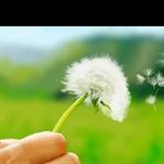 Polen alerjisinden korunmanın 10 yolu
