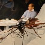 7'den 70'e Herkes Şehri Saran İlginç Böcekleri Kon