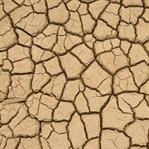 Gıda Güvenliğine En Büyük Tehdit İklim Değişikliği