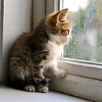 Kedilerin Sıkıldığının 5 Belirtisi