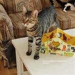Kedili Ahşap Sepet