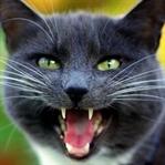 Kediniz Konuşabilseydi Size Söyleyeceği 5 Şey
