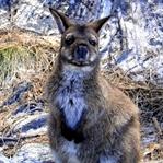 Warum Du einmal im Leben nach Australien solltest!