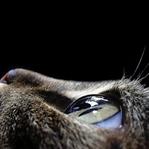 Kedi Gözü Hakkında Bilmedikleriniz