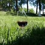 Şarap Hakkında Bunları Biliyor musunuz?