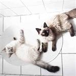 Augen auf vorm Katzenkauf - Was muss ich beachten?