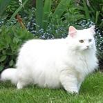 Kedileri Kanserden Korumanın Yolları