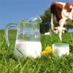 Kutu UHT Pastörize Süt Zararlı mı? Bölüm 1