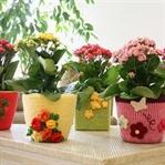 Eviniz İçin En Güzel Saksı Çiçekleri