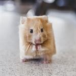 Sanatsal Kübik Hayvan Fotoğrafları