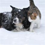 Soğuk Havalarda Hayvanları Nasıl Koruruz?