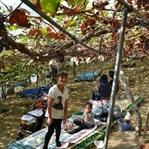 Üzüm Bağlarında Piknik.