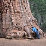 Ağacın Anıları