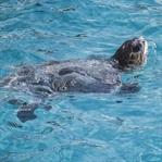 Ausflug-Tipps ab Kreta & Wasserschildkröten