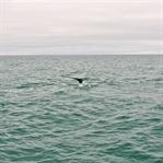 Island: Von Walen und Wasserfällen