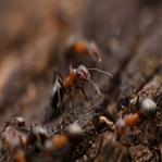 Karıncalardan Nasıl Kurtuluruz?