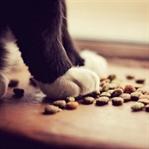 Neden Tahılsız Kedi Maması Kullanılmalı