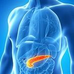 Pankreasın nerede yer alır görevleri nelerdir