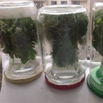 Yeşillikleri Uzun Süre Muhafaza Edebilmek İçin!
