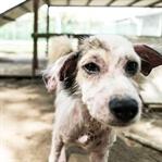 ZU BESUCH BEI SOI DOG // THAILAND-REISE