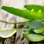 Aloe Vera ile Alternatif Kanser Tedavisi