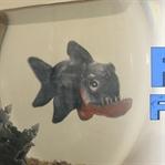 Arkadaşım Balık