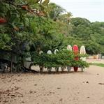 Bananen, Dschungel & die Karibikküste Costa Ricas