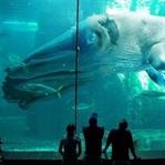 Daha Önce Hiç Duymadığınız 11 İnanılmaz Hayvan