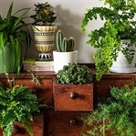 Güzel Ev Dekorasyonu İçin 5 Basit İpucu