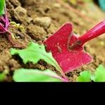 Hobi Bahçesi Oluşturun , Toprağa Dokunun