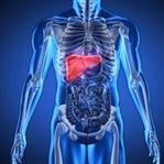 Karaciğer ne işe yarar, karaciğerin görevleri