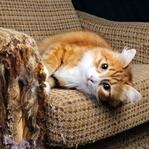 Kediler Hangi Kumaşları Tırmalamaz?