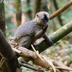 Madagaskars Tierwelt entdecken und fotografieren