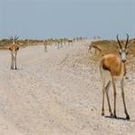 That's it - Trip-Übersicht Namibia
