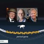 2017 Nobel Tıp/Fizyoloji Ödülü- Biyolojik Saat