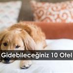 Evcil Hayvanınızla Gidebileceğiniz 10 Otel