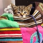 Kedi Gribi Hakkında Bilinmesi Gerekenler